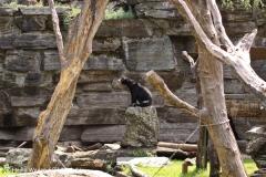 Zoo Koeln 230710- IMG_7983
