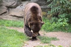 Zoo Koeln 230710- IMG_8039