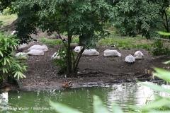 Zoo Koeln 230710- IMG_8066