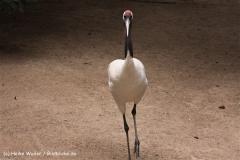 Zoo Koeln 230710- IMG_8068