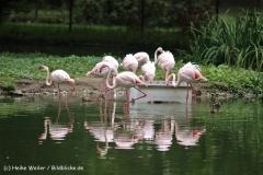 Zoo Koeln 230710- IMG_8077