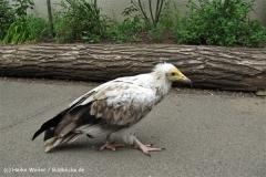 Zoo Koeln 230710- IMG_8146_1424