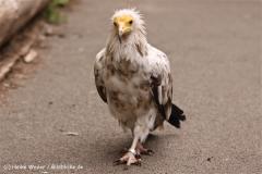 Zoo Koeln 230710- IMG_8147
