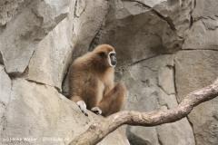 Zoo Koeln 230710- IMG_8179