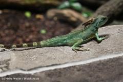Zoo Koeln 230710- IMG_8184