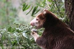 Zoo Koeln 230710- IMG_8205