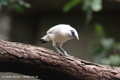 Zoo Koeln 230710- IMG_8209