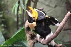 Zoo Koeln 230710- IMG_8226