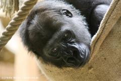 Zoo Koeln 230710- IMG_8235