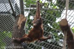 Zoo Koeln 230710- IMG_8299