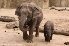 Zoo Koeln 230710- IMG_8390