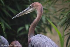 Zoo Koeln 230710- IMG_8449