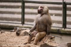 Zoo Koeln 230710- IMG_8538