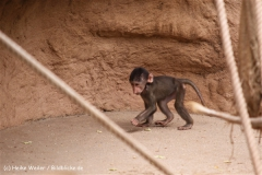 Zoo Koeln 230710- IMG_8558