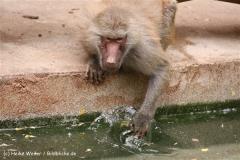 Zoo Koeln 230710- IMG_8561