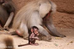 Zoo Koeln 230710- IMG_8566