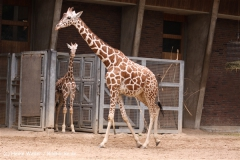 Zoo Koeln 230710- IMG_8600