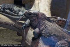 Zoo Koeln 230710- IMG_8674_1474