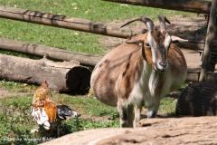 Zoo Krefeld 240710- IMG_8686