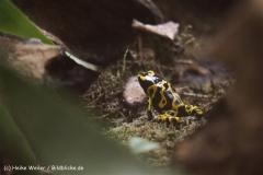 Zoo Krefeld 240710- IMG_8734
