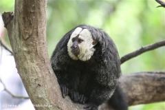 Zoo Krefeld 240710- IMG_8749