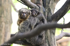 Zoo Krefeld 240710- IMG_8752