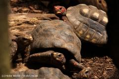 Zoo Krefeld 240710- IMG_8805