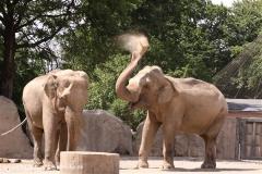 Zoo Krefeld 240710- IMG_8850