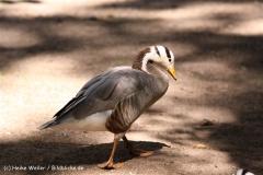 Zoo Krefeld 240710- IMG_8889