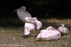 Zoo Krefeld 240710- IMG_8923