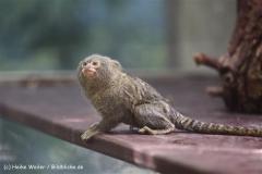 Zoo Krefeld 240710- IMG_8939