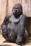 Zoo Krefeld 240710- IMG_8991