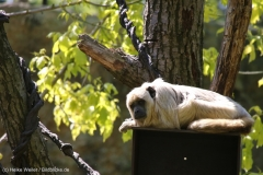 Zoo_Leipzig_110517_IMG_5244