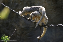 Zoo_Leipzig_110517_IMG_5248