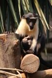 Zoo_Leipzig_110517_IMG_5301