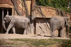 Zoo_Leipzig_110517_IMG_5365