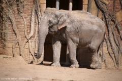 Zoo_Leipzig_110517_IMG_5366