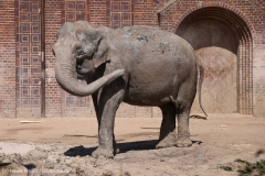 Zoo_Leipzig_110517_IMG_5370