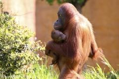 Zoo_Leipzig_110517_IMG_5520