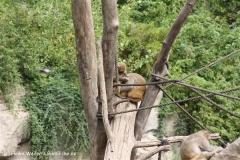 Zoo Leipzig 230711- IMG_3304