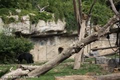 Zoo Leipzig 230711- IMG_3307