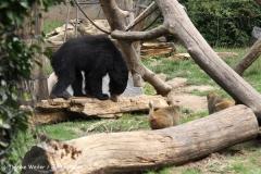 Zoo Leipzig 230711- IMG_3314