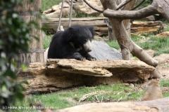 Zoo Leipzig 230711- IMG_3320