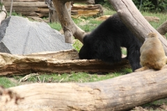 Zoo Leipzig 230711- IMG_3327