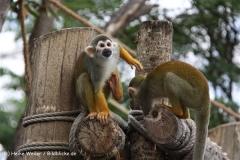 Zoo Leipzig 230711- IMG_3337-2