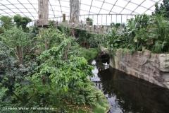 Zoo Leipzig 230711- IMG_3383