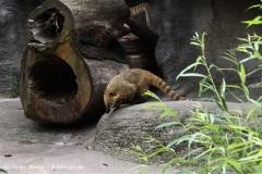 Zoo Leipzig 230711- IMG_3405