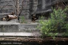 Zoo Leipzig 230711- IMG_3406