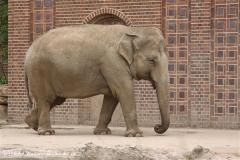 Zoo Leipzig 230711- IMG_3421