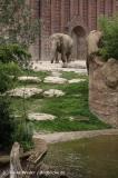Zoo Leipzig 230711- IMG_3425